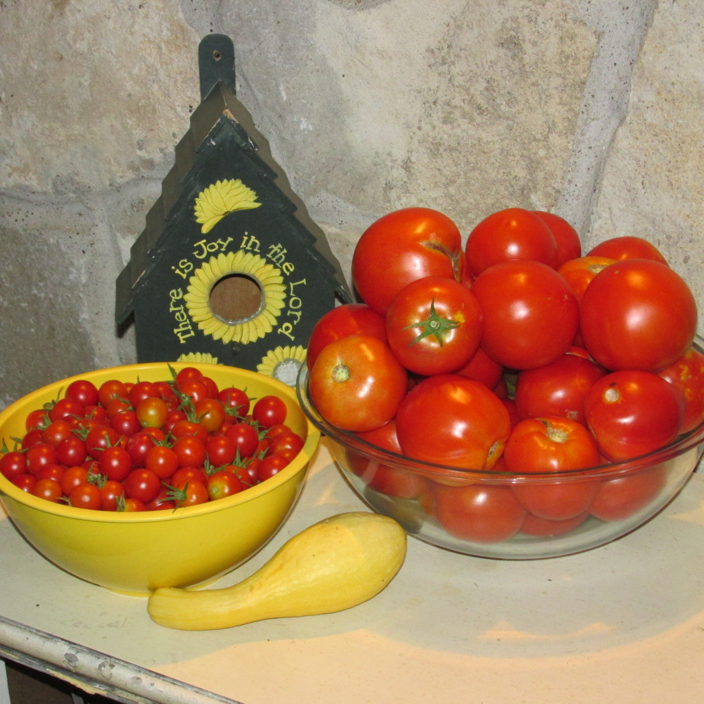 meal worms and tomatoes 019