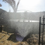 Sprinkler in chicken area. Yes and an old trampoline for shade!