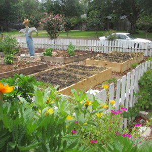 My 2 new beds planted with winter crops.