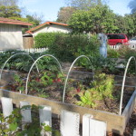 cold frame and ring of fire 003