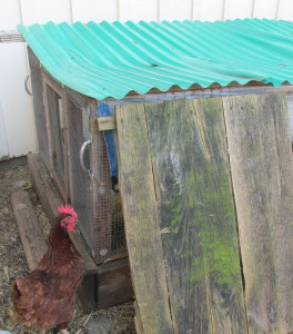rabbit hutch, cleaning coop, compost, den prob. 048
