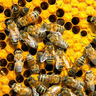 The Miracle of Bees; Time to Order Your's