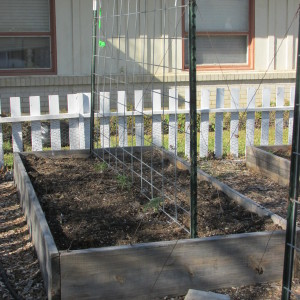 Try a fence to support your tomatoes!