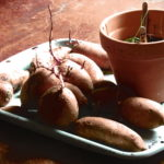 Sweet potatoes sprouting from the bottom of the basket.