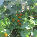 front yard garden flower border 007