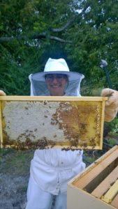 bee-hive-split-13