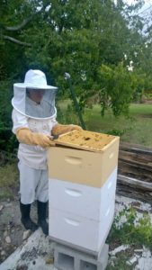 Cracking into the Langstroth hive.