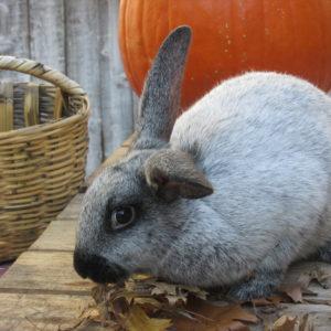 rabbits-buddy-and-dolly-005