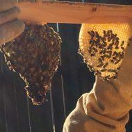 The Bee Keeping Saga Continues!