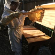 Winter Bee Hive Update