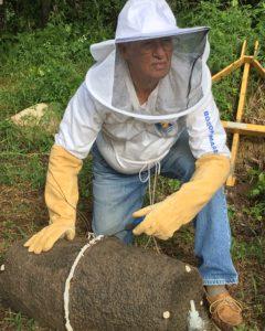 bee swarm trap 2017 7
