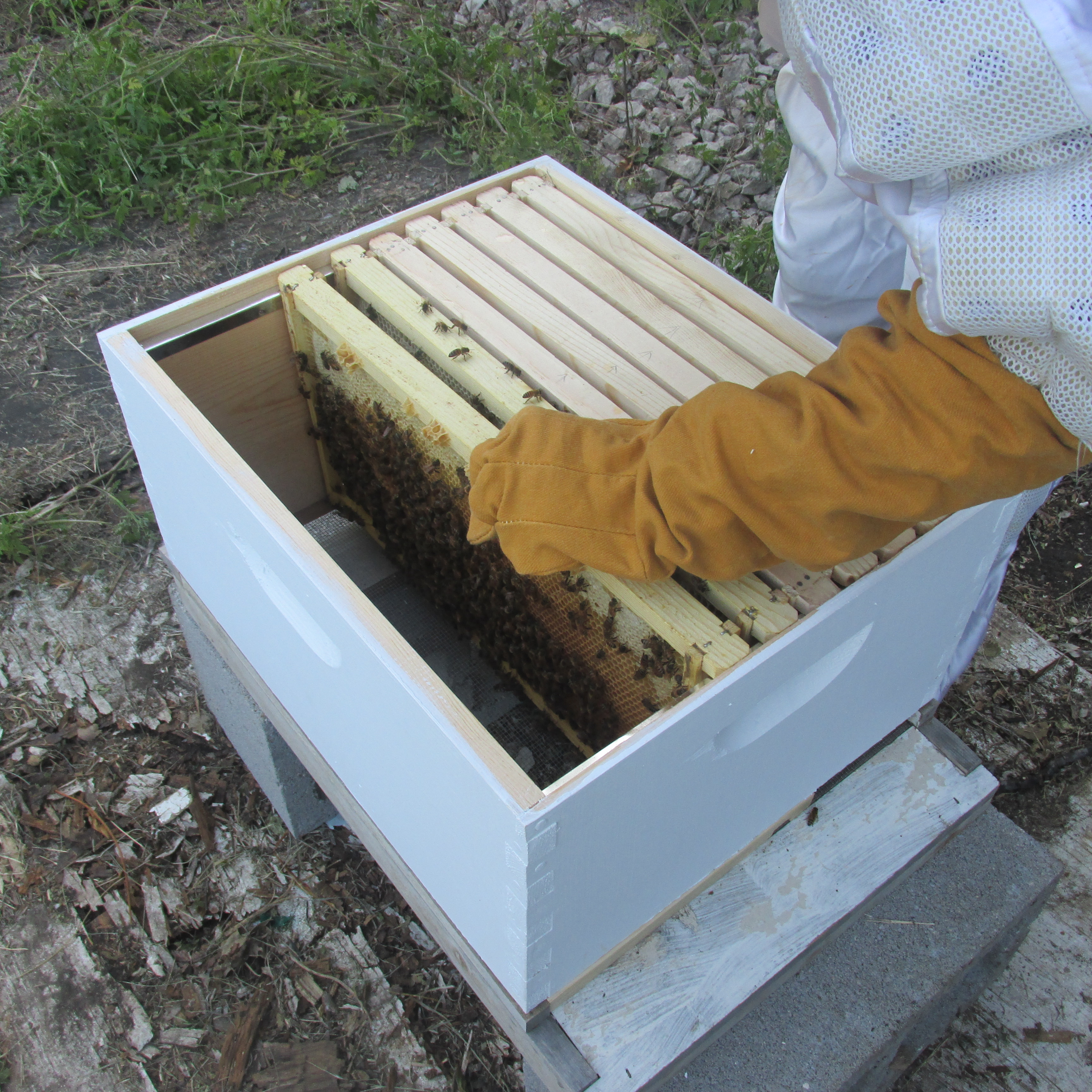 Bee Nuc Install 010