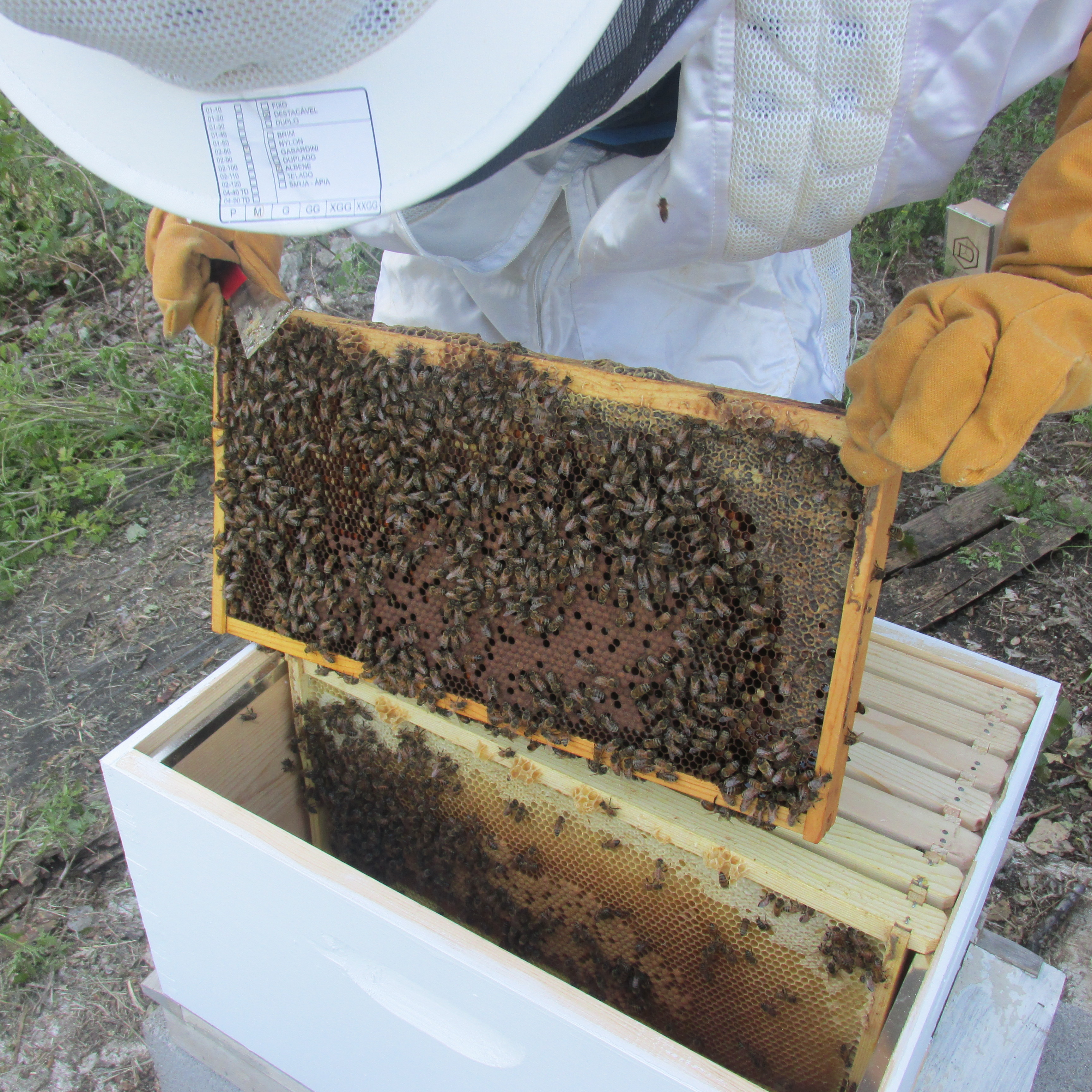 Bee Nuc Install 012