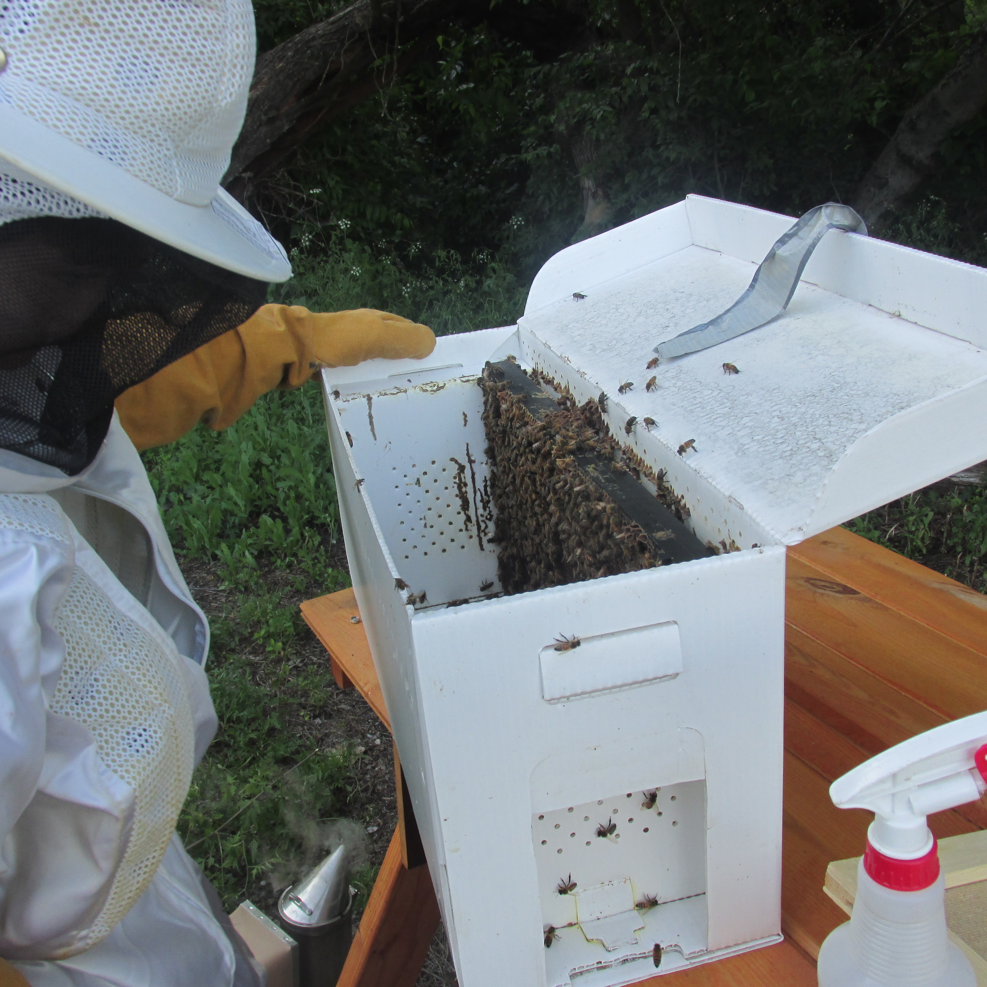 Bee Nuc Install 014