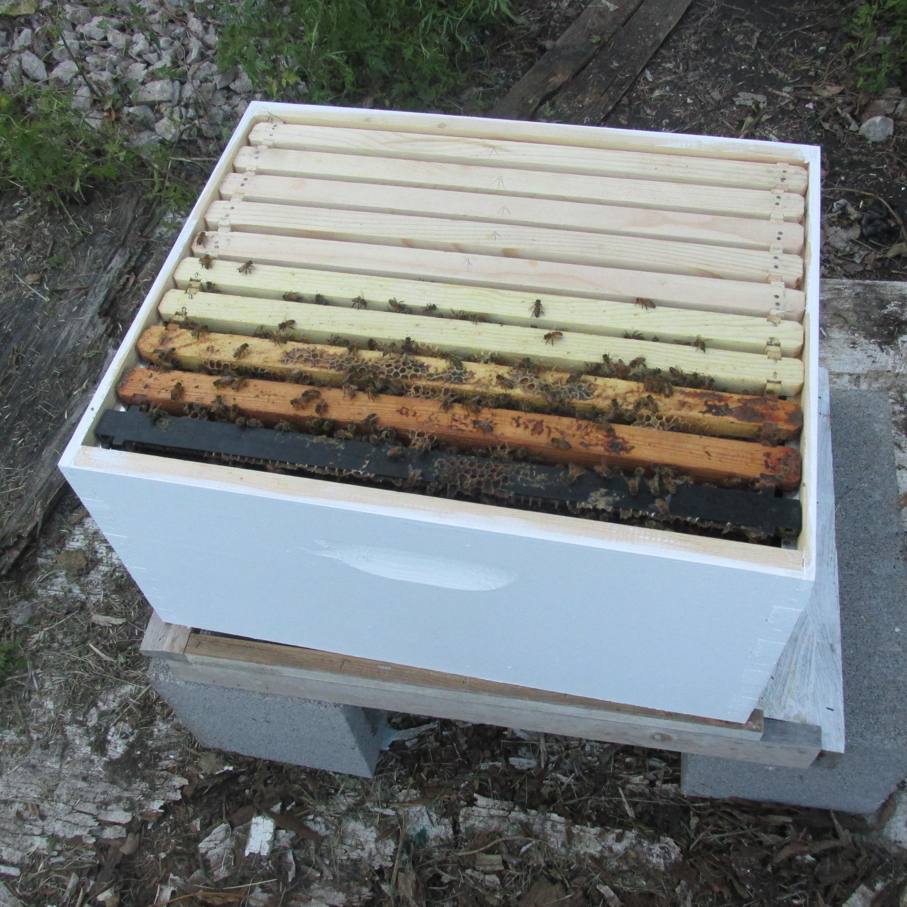 Bee Nuc Install 015